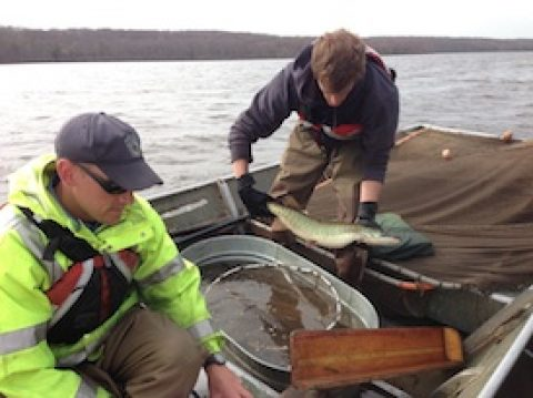NOCKAMIXON MUSKIES – A DAY ON THE LAKE WITH THE BIOLOGISTS